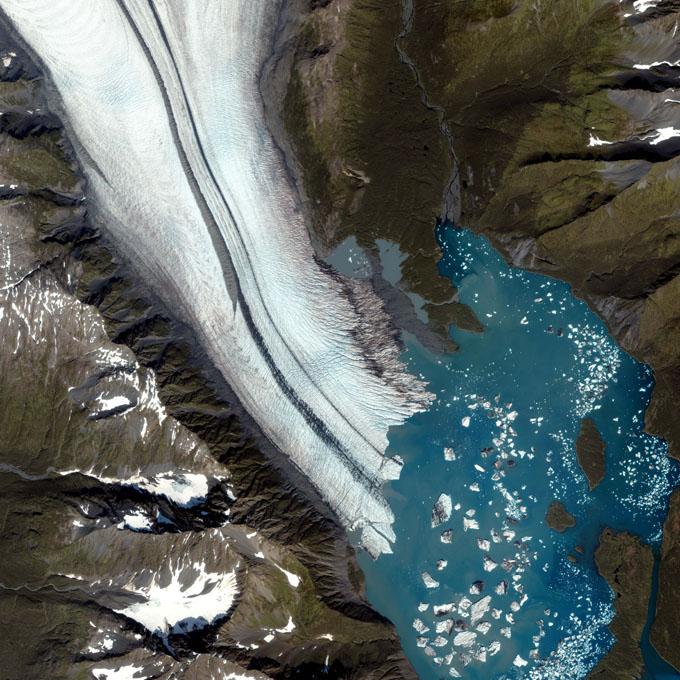 glaciers_bear1a.jpg
